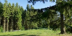 XREAL-Karlovy-Vary-Olsova-Vrata-Hurky